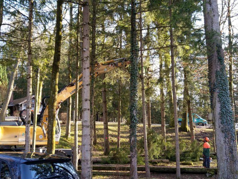 Baumfällarbeiten-Gildengelände-ASGWF